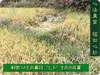 '七不'生态小黄姜1斤 生姜鲜姜小土姜 明安心法农业福田心耕(不包邮) 商品缩略图2