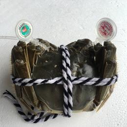 阳澄半岛大闸蟹 每一只蟹都带着双防伪戒指