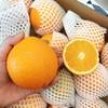 【半岛商城】进口澳洲丑橙 7斤装 约16个果左右 全国包邮 商品缩略图4