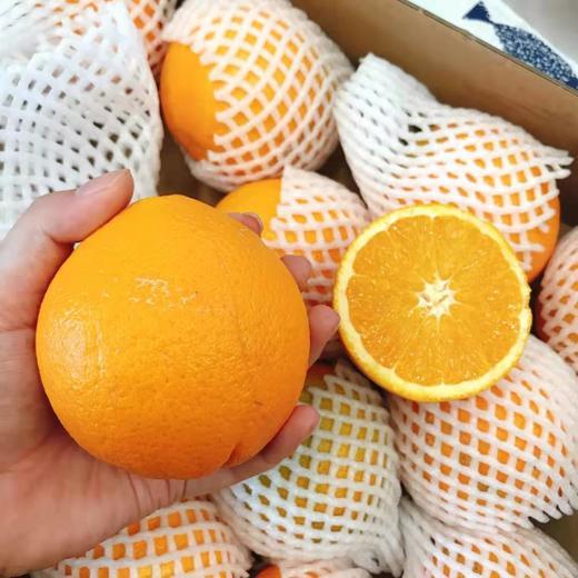 【半岛商城】进口澳洲丑橙 7斤装 约16个果左右 全国包邮 商品图4