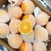 【半岛商城】进口澳洲丑橙 7斤装 约16个果左右 全国包邮 商品缩略图5