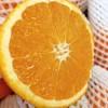 【半岛商城】进口澳洲丑橙 7斤装 约16个果左右 全国包邮 商品缩略图0