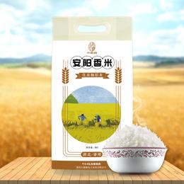 【当季新鲜大米】安阳香米10斤装
