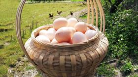 【团长】皖南土鸡蛋,让每一个家庭吃上真正天然营养的好鸡蛋