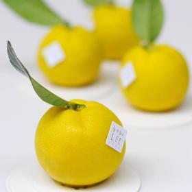 日本小柚子