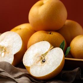山东秋月梨礼盒装 产地现摘现发新鲜到家  新鲜酥脆 清甜可口 节日馈赠礼品