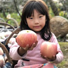 【紧急助农】助力陕西百万斤红富士苹果超级甜仅9.9元每/箱!香甜多汁 清脆可口,恳求转发支持!