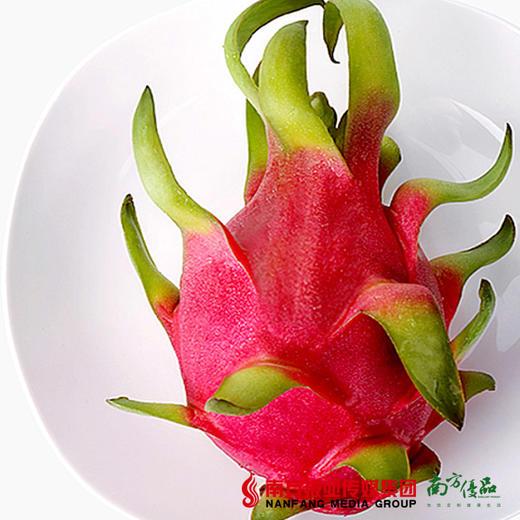 【全国包邮】西双版纳紫红火龙果 (72小时内发货) 商品图2