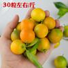 竹山当季新鲜水果脆甜金桔 商品缩略图1