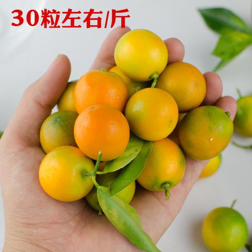 竹山当季新鲜水果脆甜金桔 商品图1