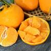 农道大叔精选   春见耙耙柑 肉质脆嫩 多汁 清甜 现摘生鲜水果 商品缩略图3