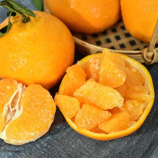 农道大叔精选   春见耙耙柑 肉质脆嫩 多汁 清甜 现摘生鲜水果 商品图3