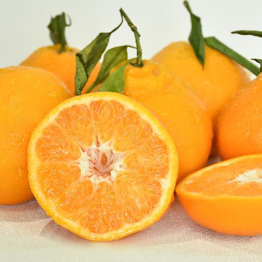 农道大叔精选   春见耙耙柑 肉质脆嫩 多汁 清甜 现摘生鲜水果 商品图5