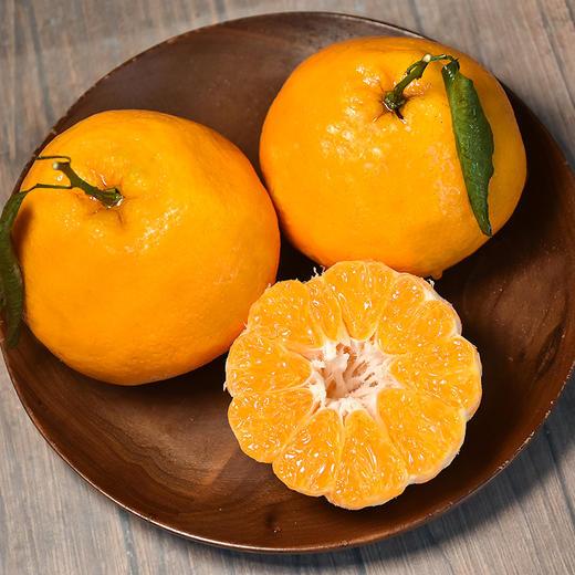 农道大叔精选   春见耙耙柑 肉质脆嫩 多汁 清甜 现摘生鲜水果 商品图0