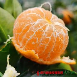 【全国包邮】广西 西林沙糖桔 10斤±5两/箱(72小时内发货)