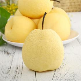 【陕西• 蒲城酥梨】一口酥梨一口汁 新鲜味美 脆甜可口 产地直发 货送到家 家人共享 入冬好梨