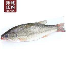 鲈鱼约1斤-048734