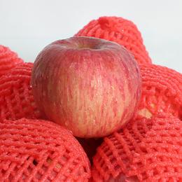山东红富士苹果  酥脆爽口  果香浓郁  酸甜可口  5斤装